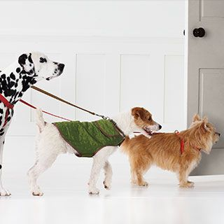Dog Exercise Tips from #MarthaStewartPets and #Petsmart. #petcare #pettipsExercise Tips, Three Dogs, Petcare Pettip, Dogs Exercise, Stewart Leash, Pets, Doggie Goodies, Martha Stewart, Dogs Health