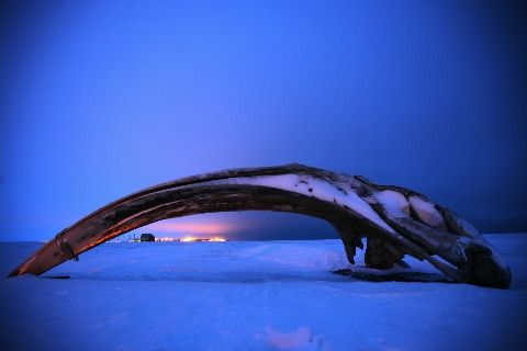 A bone from a bowhead whale skull rests on the arctic shore outside Barrow, Alaska. Residents along Alaska's North Slope sued to stop Shell oil from drilling in the nearby Beaufort Sea, where the whale migrates. Shell now says it is rethinking its plans.
