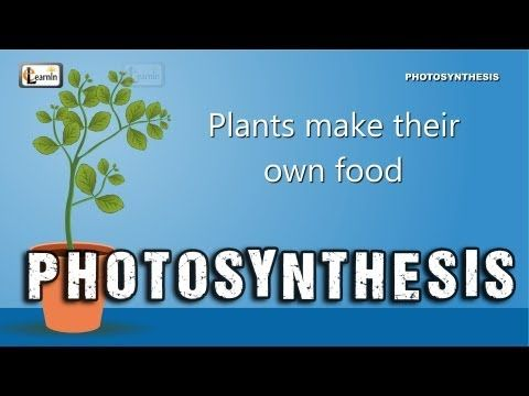 Photosynthesis in Plants  #Education #Kids #Biology #Photosynthesis #Plants