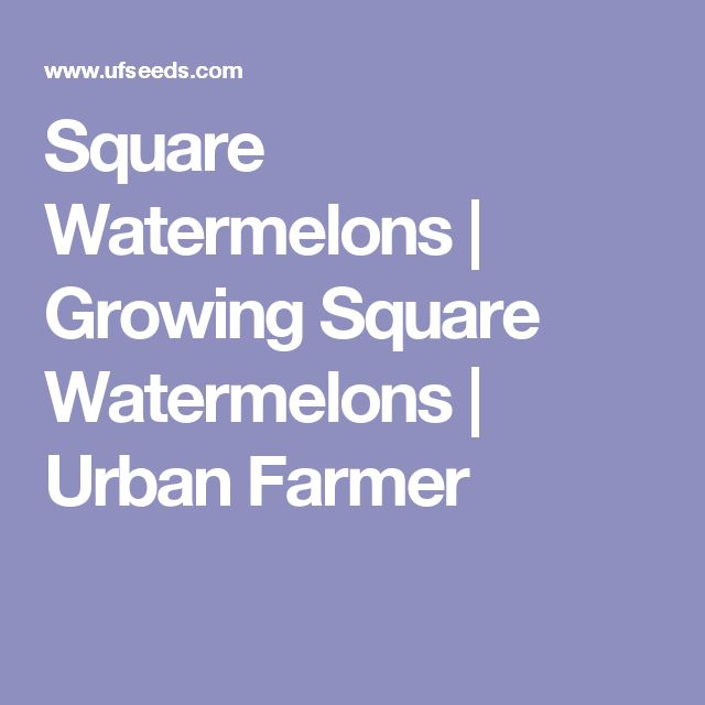 Square Watermelons | Growing Square Watermelons | Urban Farmer