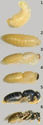 Amazing website for complete & incomplete metamorphosis. Great pics and puzzles.