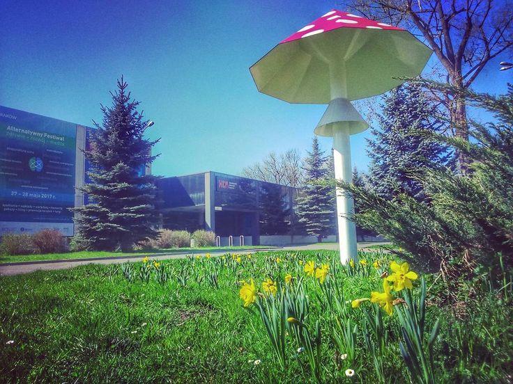 Wiosna ach to Ty!  #encek #kulturakrk #spring #flowers #wiosna #polanadziei #nowahuta #igerskrakow #sunnyday