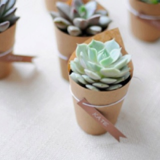 Succulent favors wrapped in brown paper