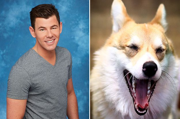 """We Replaced The Cast Of """"The Bachelorette"""" With Dogs"""