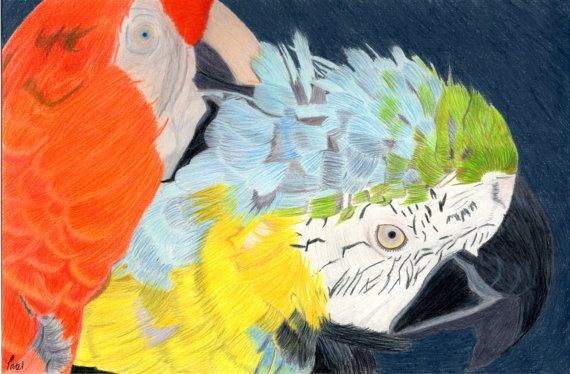 Parrots Poster 24x16 by BavsCrafts on Etsy, £21.00