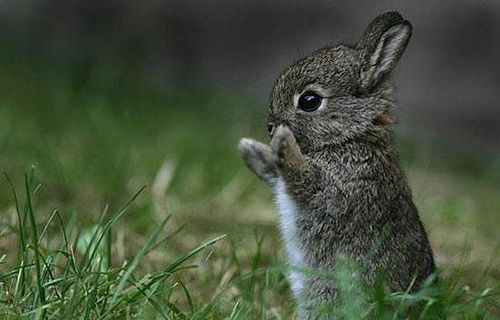 Gah!Cutest Baby, High Five, Cute Animal, Animal Pictures, Animal Baby, Easter Bunnies, Baby Bunnies, Baby Animal, Animal Photos