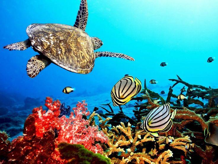 Gambar Terumbu Karang & Ikan