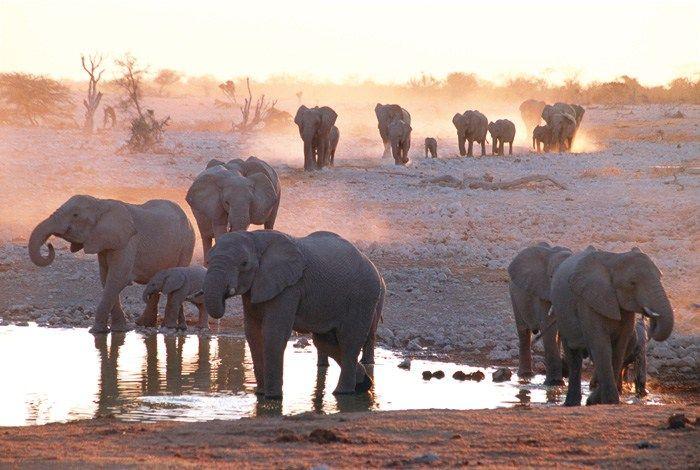 Elefanter i Namibia