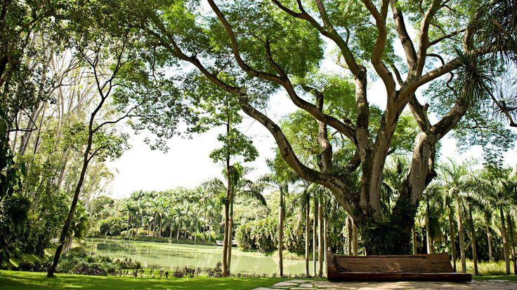Inhotim: Brazil's Contemporary Art Wonderland - Minas Gerais