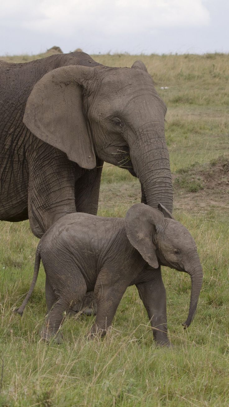 Best 25+ Baby elephants ideas on Pinterest - photo#34