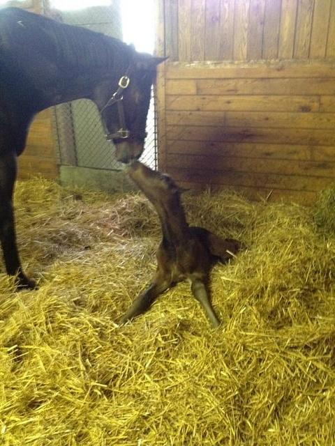 #motherhood #mare #foal