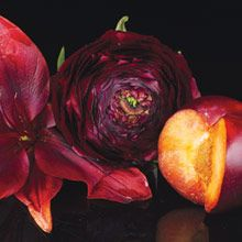 """""""Kukkia"""" Forbidden Fantasy """"Desire"""" Magnolian ja jasmiinin huumaavat tuoksut yhdistyvät vahvoihin ja vietteleviin tummien luumujen ja mustaherukan aromeihin."""