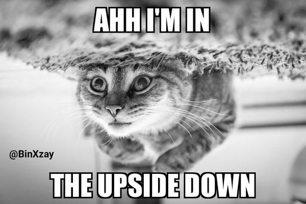 Poor Kitty in the Upside Down Stranger Things fans will get this :)