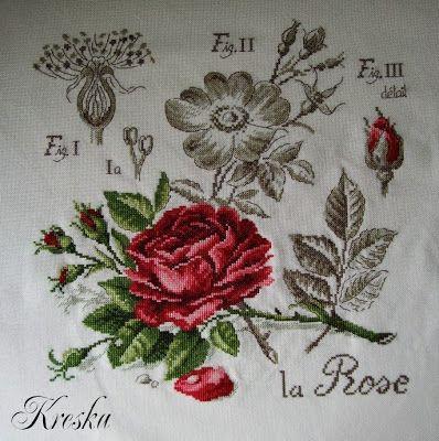 DFEA Botanique - Róża ~KONIEC~
