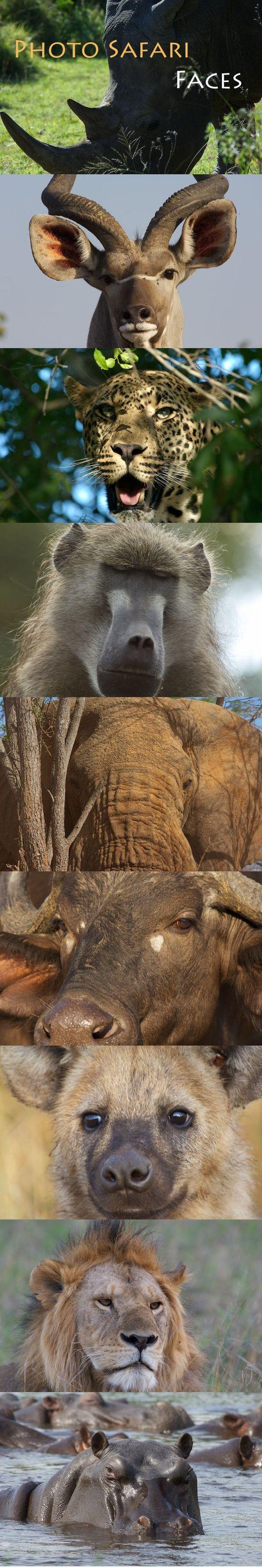 Wildlife photography courses in South Africa, Botswana, Namibia, Tanzania and Kenya.