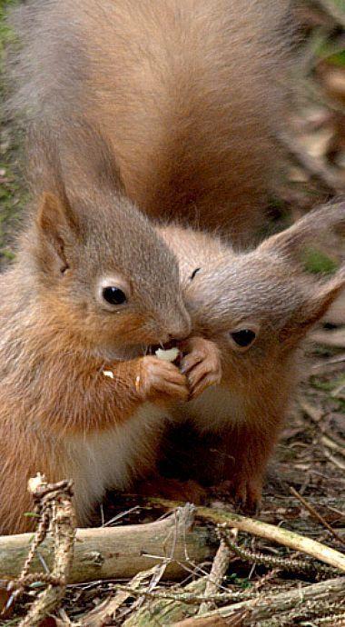 Squirrel secrets
