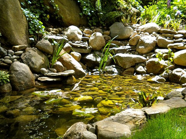 115 best images about home gardening on pinterest for Fish pond specialists