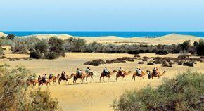 Camel riding on Playa de Maspalomas, Gran Canaria