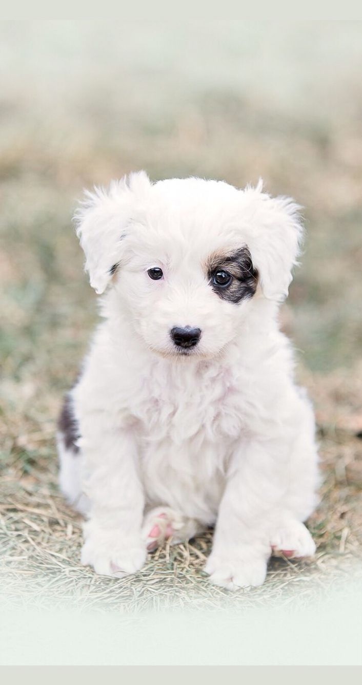 best animals images on pinterest dog cat fluffy pets and