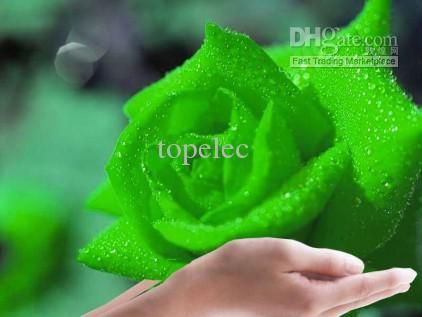 Green Rose Seeds Rose Seed From Dhgate Authorized Supplier From Topelec, $2.51 | Dhgate.Com