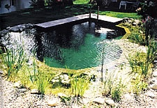Natural swimming pond.
