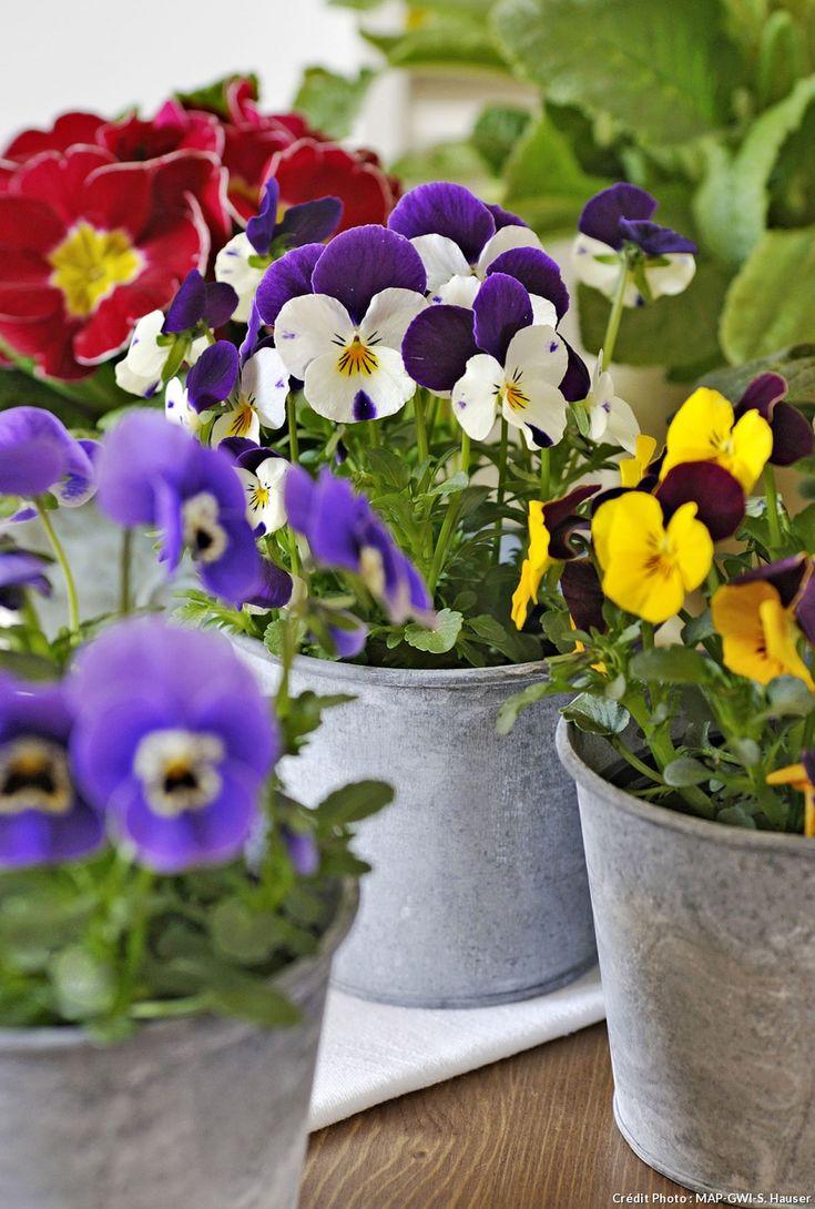 Les 25 meilleures id es concernant plantes annuelles sur pinterest fleurs en pots - Petit jardin en pot saint denis ...