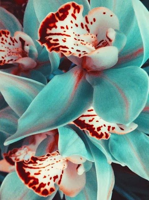 Beauty of Orchid