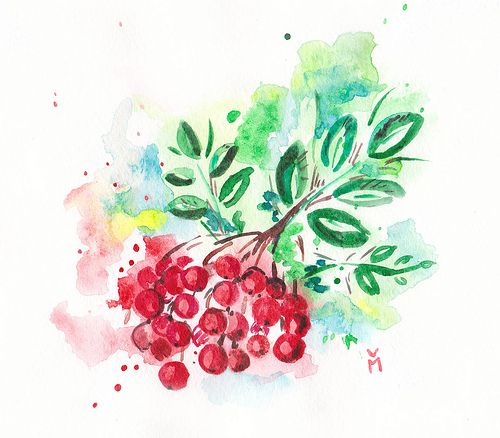 Рябина_акварель #watercolor