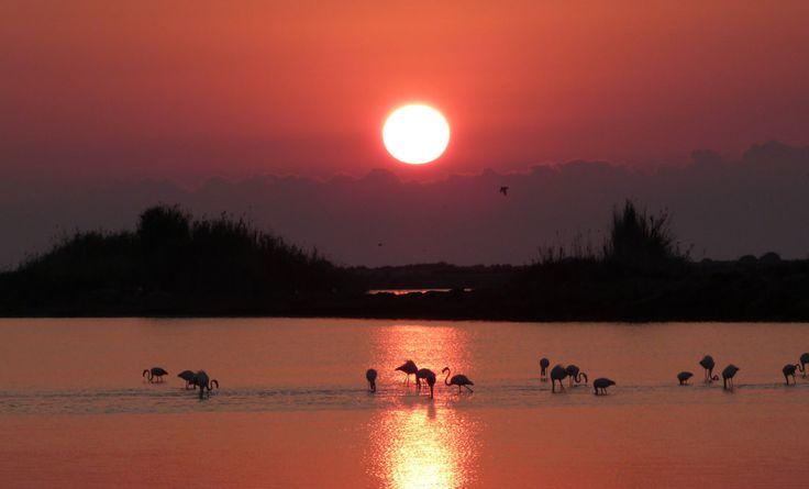 Flamencos rosados al atardecer | Relajación sin Estrés