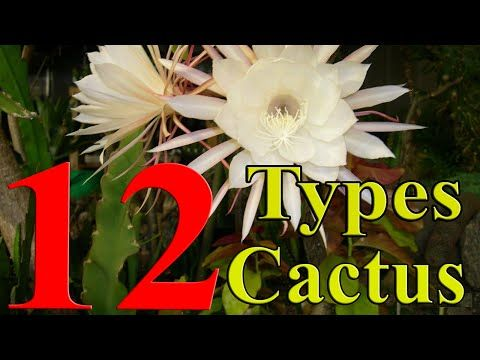 Cactus Plants - 12 Types of Cactus you can Grow at Home - YouTube                                                                                                                                                     More
