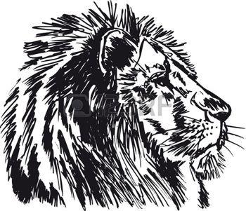 leone: Sketch di un grande leone maschio africano. illustrazione