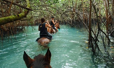 A trail ride through mangroves at a horse sanctuary at Lope Lope Lodge, Espiritu Santo