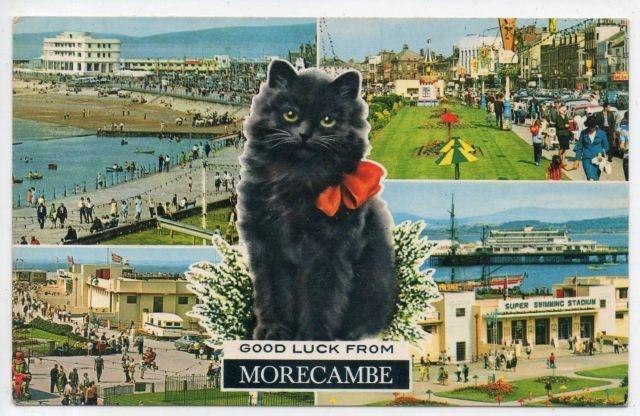 Cat Postcard - Good Luck from Morecambe | eBay