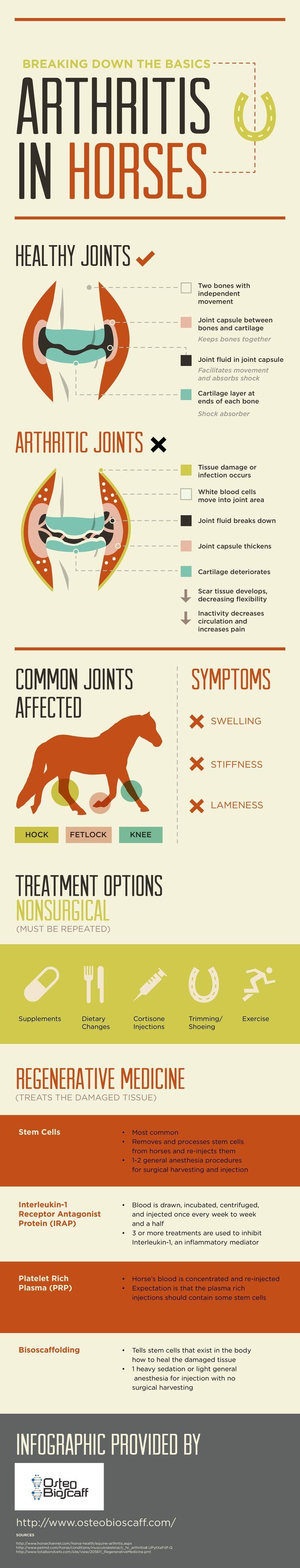 Equine Arthritis and Its Treatments Infographic - interiors-designed.com