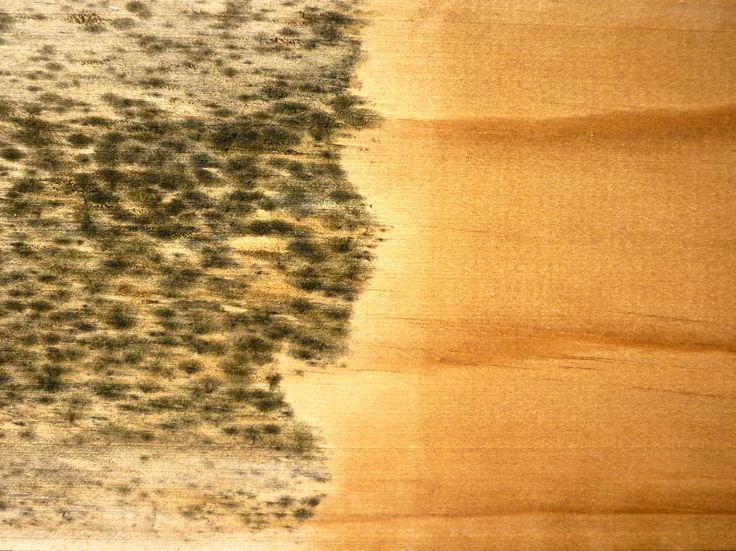 CUTEK clear oil resisting mold and fungi on untreated Radiata Pine.