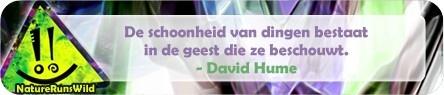 De schoonheid van dingen bestaat in de geest die ze beschouwt. - David Hume http://naturerunswild.com/spreuken-liefde.php #citaat