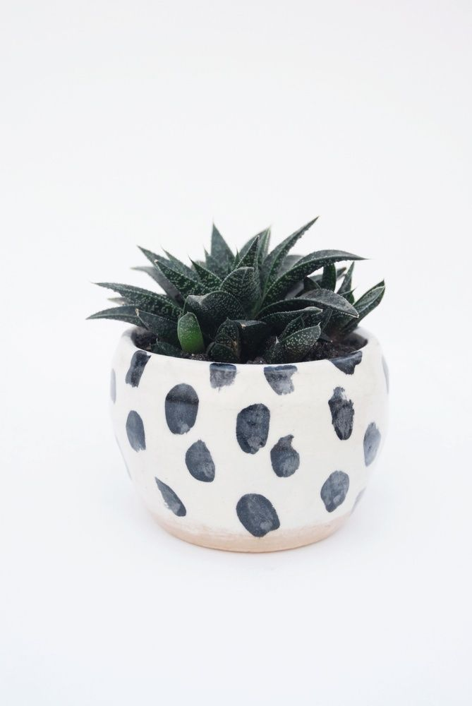 spot pot by jen ray - gin bay