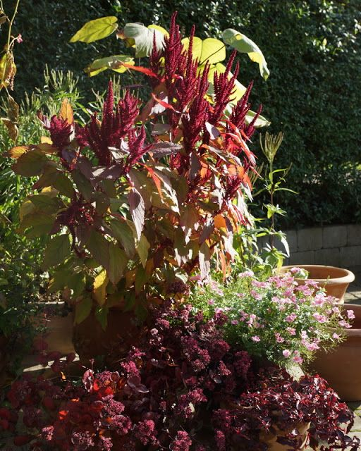 Fra frø til blomst: Rødglødende efterårskrukker