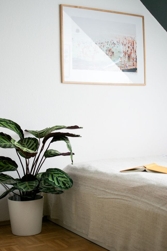 Bedroom With White Walls And Calathea Houseplant