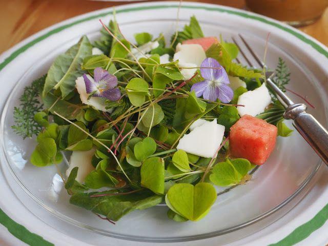 Rouva Kasvis: Villivihanneksista salaattia