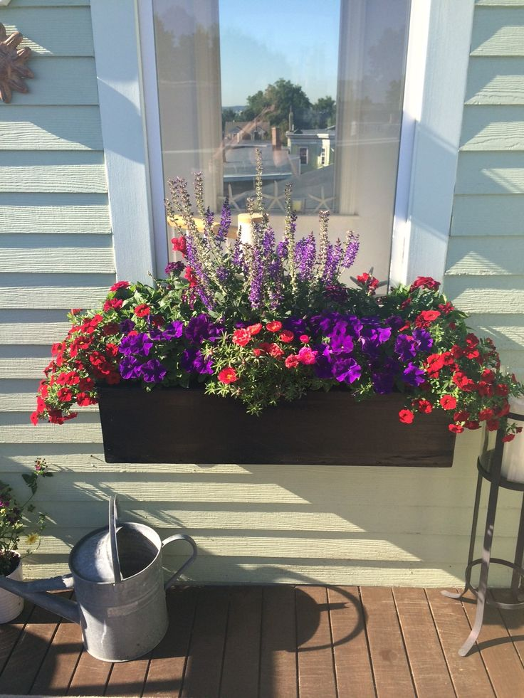 Window Box with Red and Purple Petunias, Portulaca, Snapdragons and Salvia.