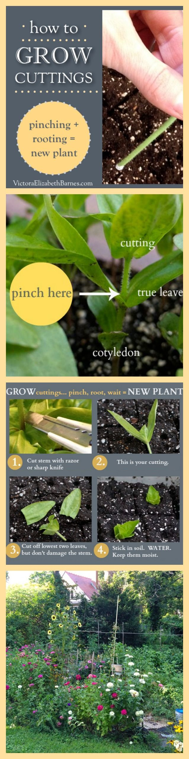 How to grow plant cuttings.