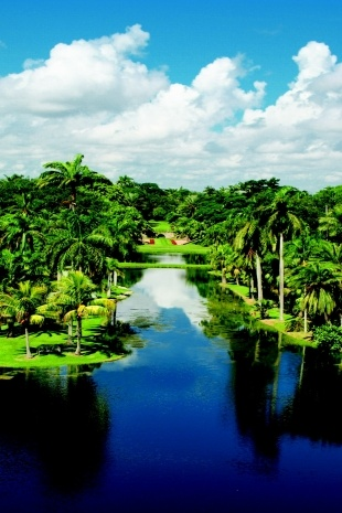 how to grow a tropical looking garden in adelaide