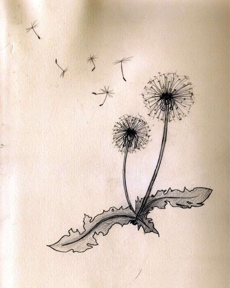 "Dandelion tattoo, this is almost exactly what I want but I'm thinking without the leaves and only four seeds blowing off and I think I want it to say, ""Dandelion Wishes Come True"" beside it."