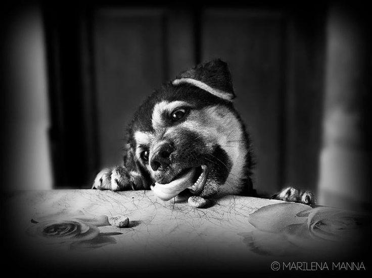 Morfeo, un tenerissimo Cucciolo di cane