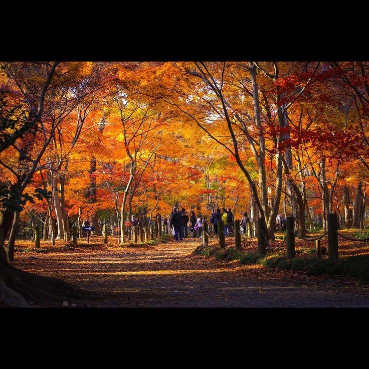 . . 明日から仕事に 復帰します。 . . #canon#eos6d#6d#tokyocameraclub#lovers_nippon#loves_nippon#wu_japan#jp_gallery#ig_japan#ig_photography #team_jp_ #instaphotos#ig_photooftheday#team_jp_東#art_of_japan_#instagram #icu_japan#キャノン#一眼レフ#カメラ#お写んぽ#カメラ好きな人と繋がりたい#写真好きな人と繋がりた#東京カメラ部#キタムラ写真投稿#けしからん風景#平林寺#埼玉#紅葉#はなまっぷ紅葉2017