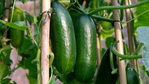 83 Best Images About Vegetable Garden On Pinterest 400 x 300