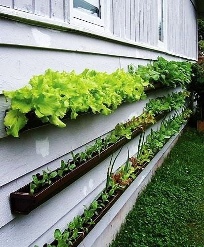 balcony garden idea: gutters/eavestroughs easy to mount to a wall or railing for herbs, greens, other plants that don't have deep roots
