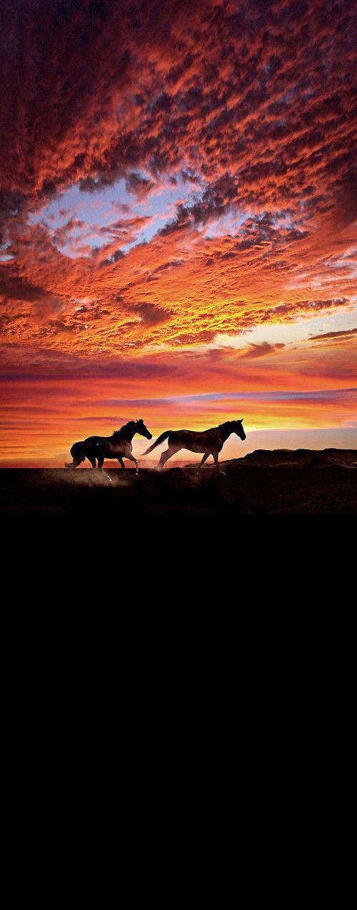 Stunning... ❤ Horses