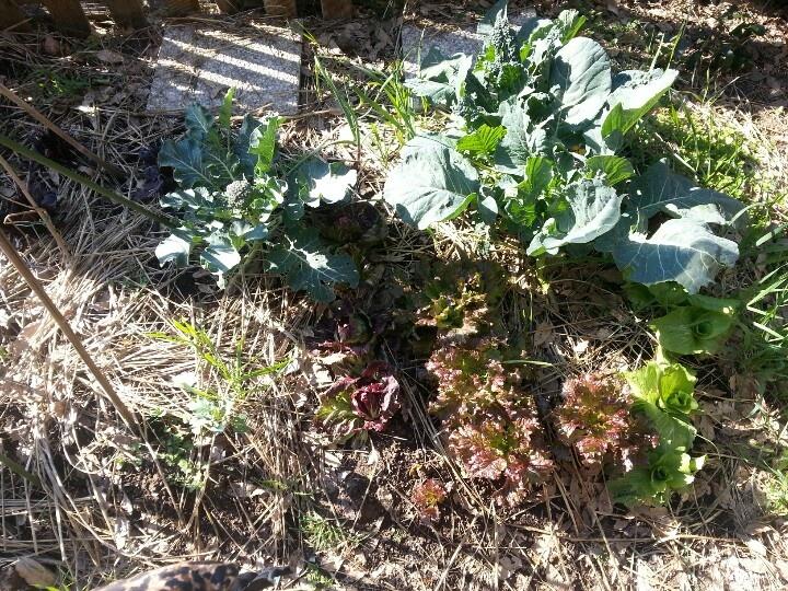 Winter veggie horto
